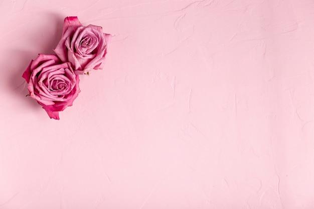 コピースペースでバラのセット 無料写真