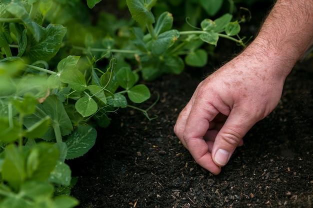 土に種を置くクローズアップ男 無料写真