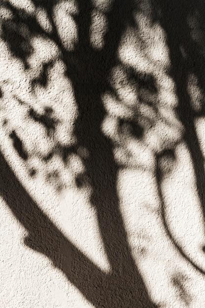 壁に木の影 無料写真