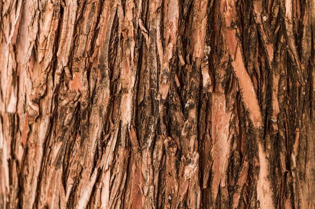 自然な垂直の森の木のテクスチャ 無料写真