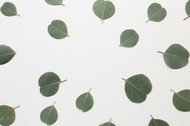 Вид сверху на расположение зеленых листьев Бесплатные Фотографии