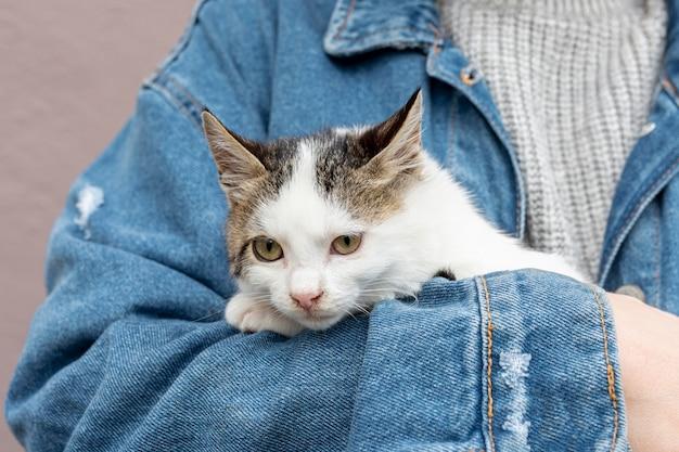 Крупным планом милый домашний кот сидит на руках владельца Бесплатные Фотографии