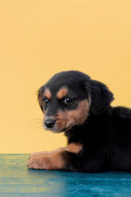 床に座ってハイアングルかわいい犬 無料写真
