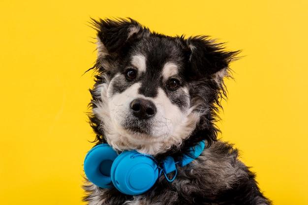 ヘッドフォンで正面のふわふわした犬 無料写真