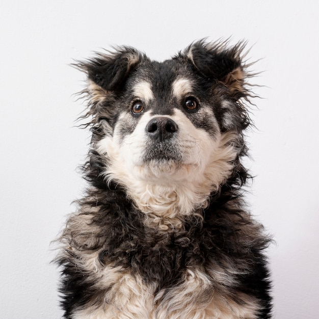 白い背景の上の正面の毛皮のような犬 無料写真