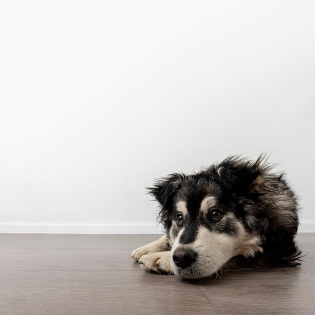 床に座って自宅でコピースペース犬 無料写真