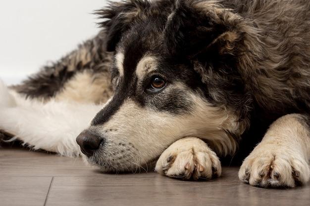 床に座ってクローズアップかわいい犬 無料写真