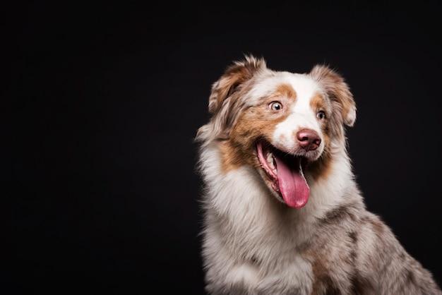 コピースペースで正面のかわいい犬 無料写真