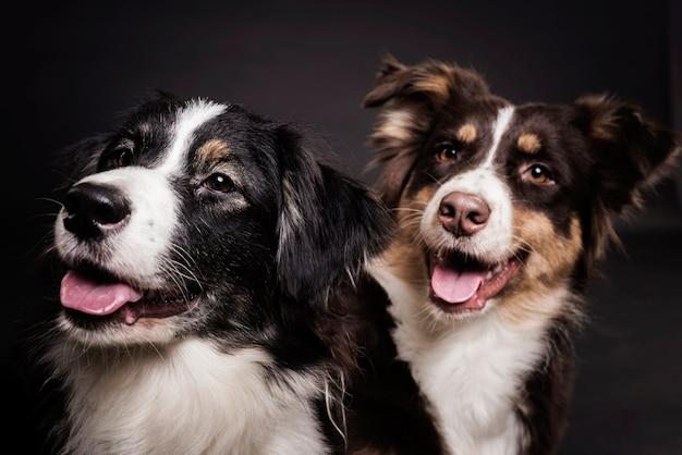 Вид спереди милые собаки Бесплатные Фотографии