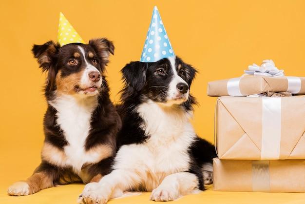 Симпатичные собаки со шляпами Бесплатные Фотографии