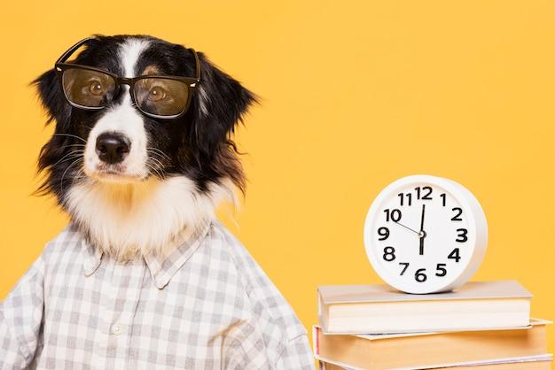 Милая собака с часами Бесплатные Фотографии