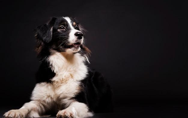 コピースペースで座っているかわいい犬 無料写真
