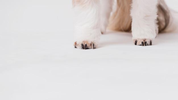クローズアップ犬の前脚 無料写真