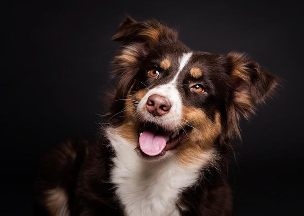 正面のかわいい犬 無料写真