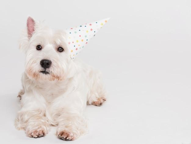 Милая маленькая собака в шляпе Бесплатные Фотографии