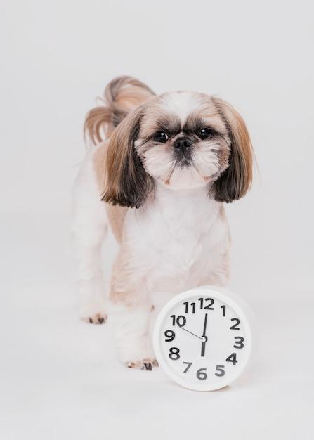 時計と正面のかわいい犬 無料写真