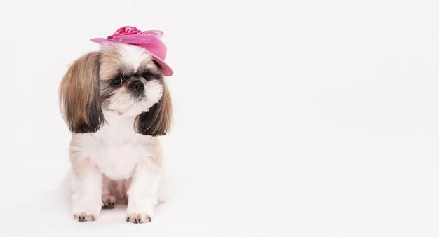 正面の帽子と小さな犬 無料写真
