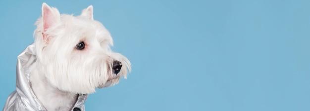 Милая маленькая собака с копией пространства Бесплатные Фотографии
