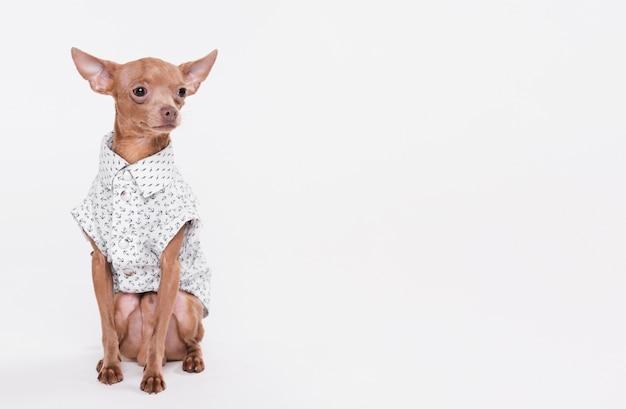 Милая маленькая собака с костюмом Бесплатные Фотографии