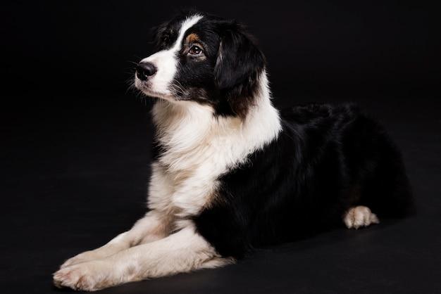 Милая собака сидит Бесплатные Фотографии