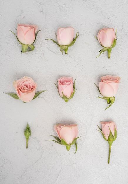 Макро розовые розы бутоны плоская планировка Бесплатные Фотографии