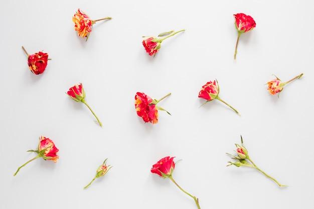 白地に赤いカーネーションの花のアレンジメント 無料写真