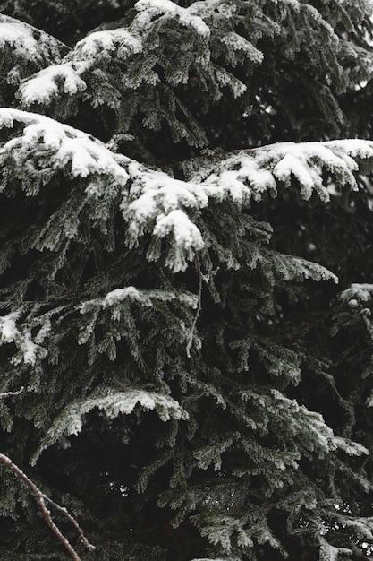 Крупный план веток листьев со снегом Бесплатные Фотографии