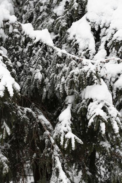 雪に覆われた枝とクローズアップの松の木 無料写真