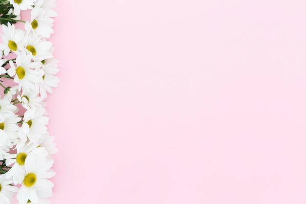 ピンクの背景の上から見る花のフレーム 無料写真