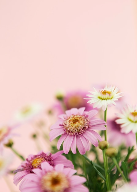 カラフルな春の花の装飾 無料写真