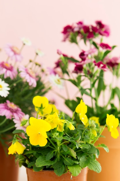 色とりどりの花で春のコンセプト 無料写真