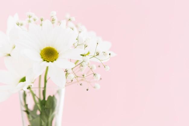 Концепция весны с красивыми ромашками Бесплатные Фотографии
