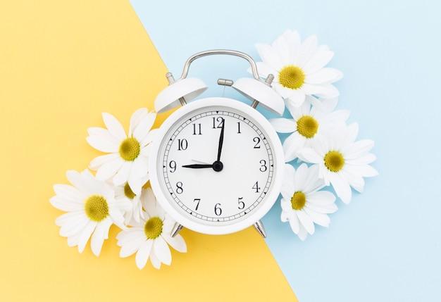 時計とヒナギクのトップビューの配置 無料写真