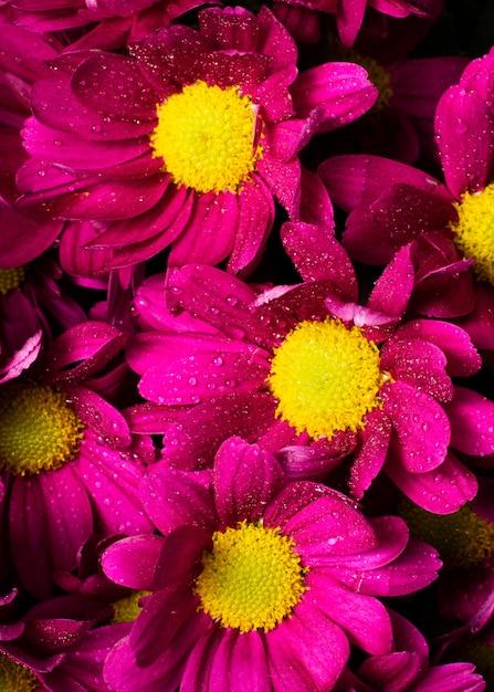 Крупный план красочные весенние цветы Бесплатные Фотографии
