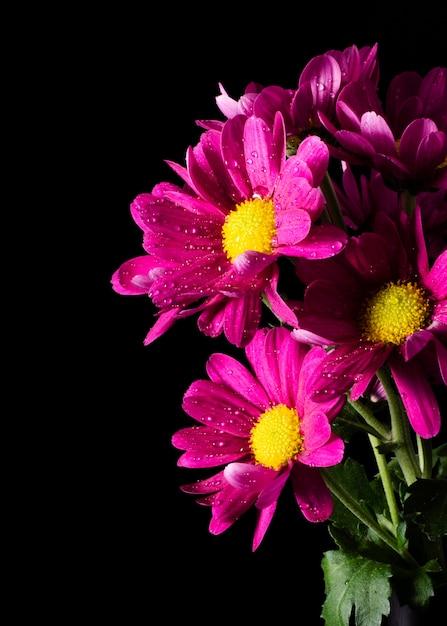 Макро цветут весенние цветы Бесплатные Фотографии