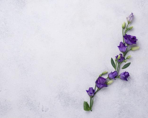 テーブルの上に花が咲くトップビュー 無料写真