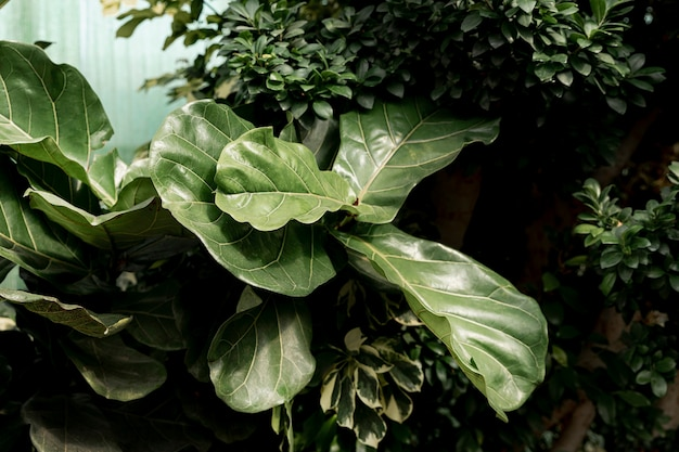 Композиция с красивым зеленым растением Бесплатные Фотографии