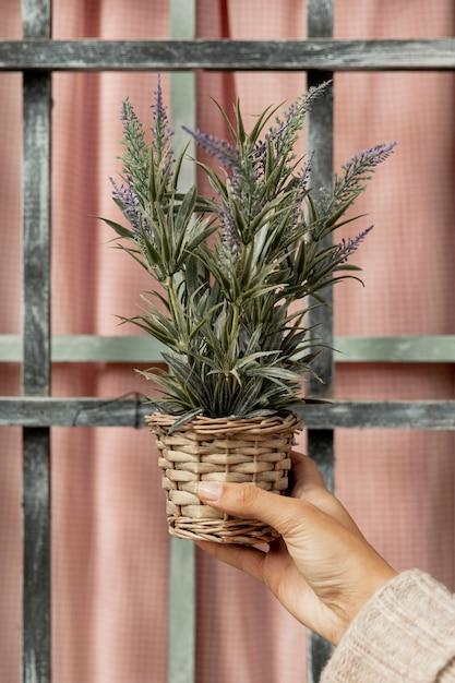 鍋に植物を保持しているクローズアップの女性 無料写真