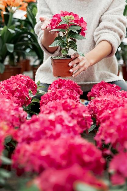 Крупным планом женщина, держащая горшок с розовым цветком Бесплатные Фотографии