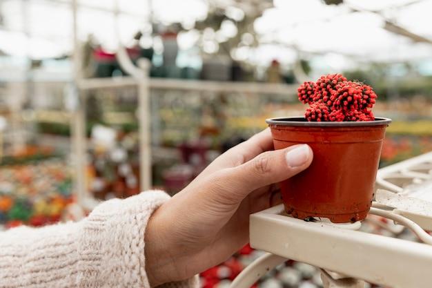 サボテンと植木鉢を持っているクローズアップ手 無料写真