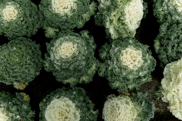 Расположение сверху с зелеными растениями Бесплатные Фотографии