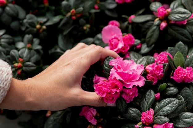 ピンクの花に触れるクローズアップ手 無料写真
