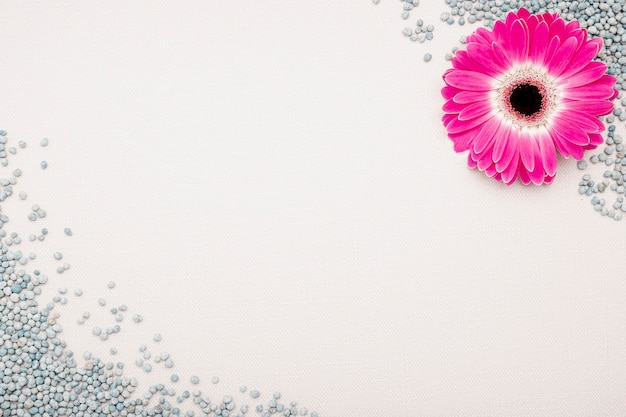 ピンクの花と小石のトップビューフレーム 無料写真