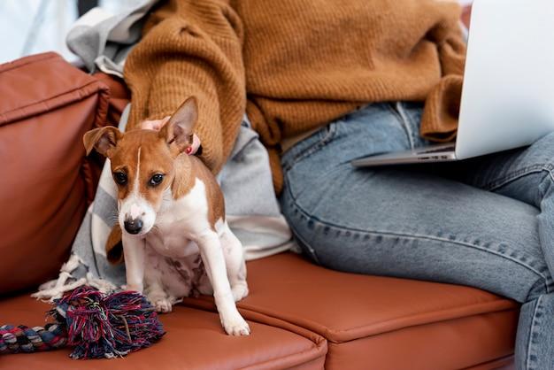 Вид спереди собаки на диване с женщиной Бесплатные Фотографии