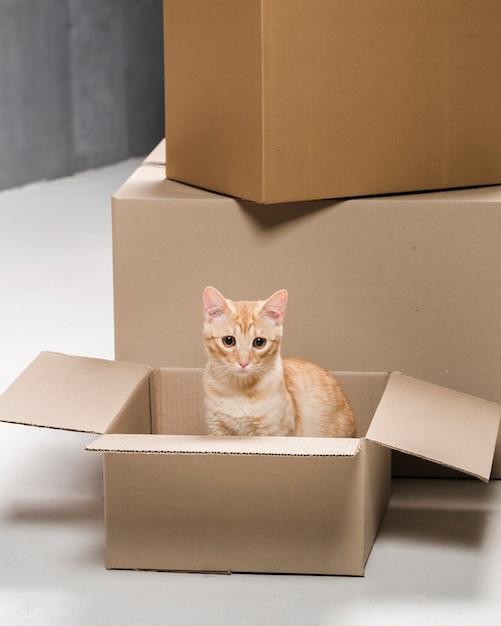 段ボール箱の中の愛らしい小さな猫 無料写真