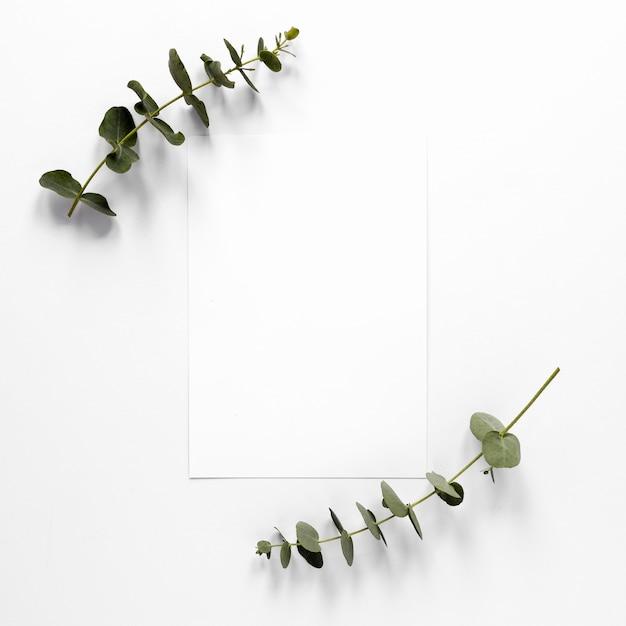 空白の紙のシートで枝を残します 無料写真