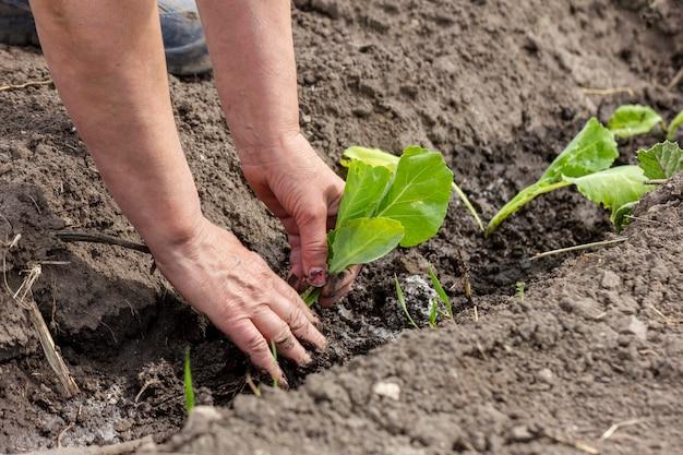 Макро руки садовые растения на открытом воздухе Бесплатные Фотографии