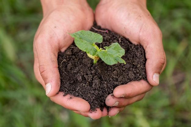 有機植物が付いている土を保持している手 無料写真
