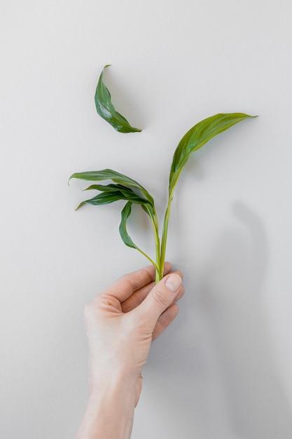白い背景の上の植物を保持しているトップビュー人 無料写真