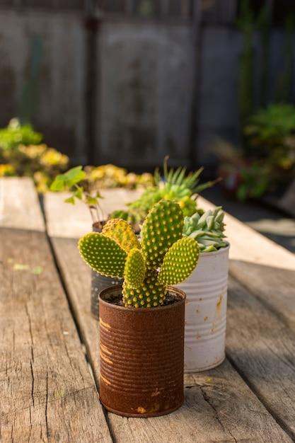 鉢の正面かわいい植物 無料写真